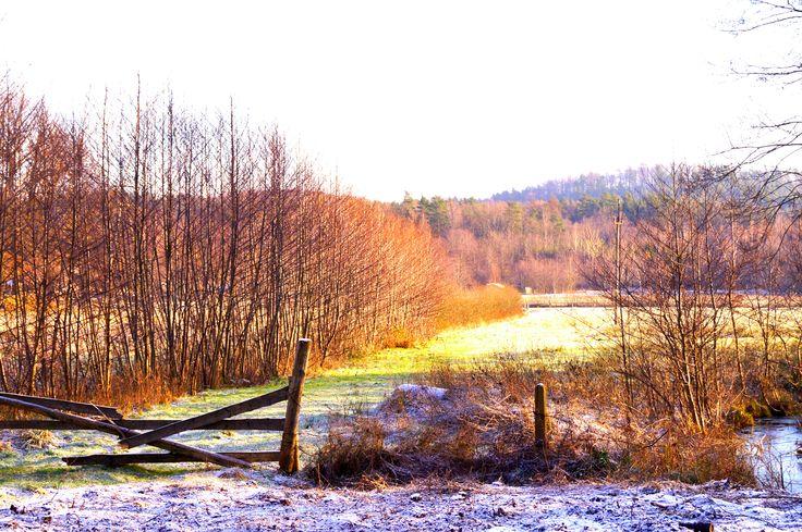 Pastwiska zimą niesamowite