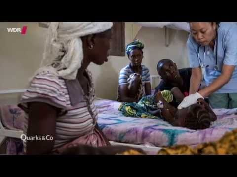 Ebola! Weltweite Seuche?