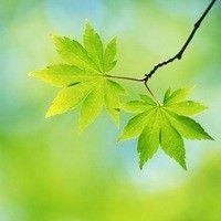 О САЙТЕ - Природа против рака