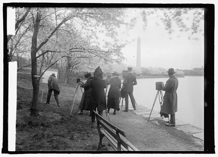 Photographing  the Cherry Blossoms in Washington, D.C. c.1922