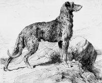 Scottish Deerhound by Herbert Dicksee