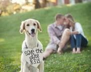 save the date with dog - Pesquisa Google