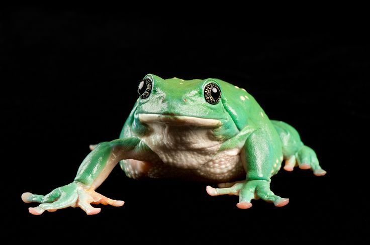 Ever heard of the Mexican dumpy tree frog? See our favorite pictures of unusual frogs around the globe.