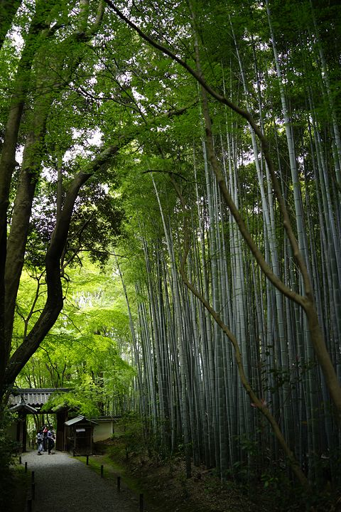 Bamboo pathway in Kyoto, Japan