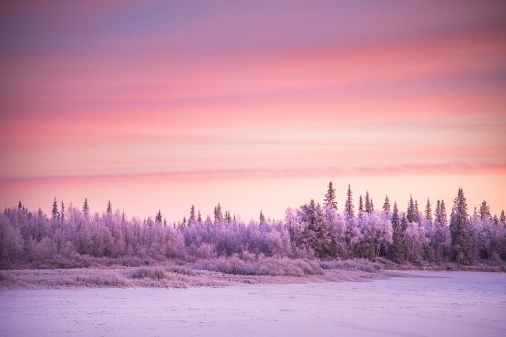 Pink skies and freezing cold: this is what's going on in Lapland right now