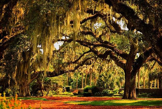 "Old Southern Plantation Oaks"" by Kathy Baccari   RedBubble"