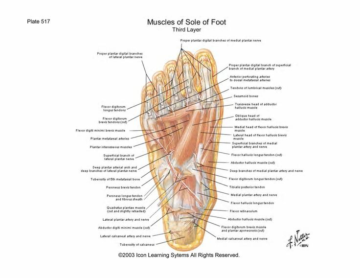 The 12 Best Stretching Images On Pinterest Peroneus Longus