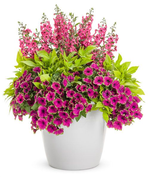 Breathtaking | Proven Winners. Includes instructions for plant arrangement.