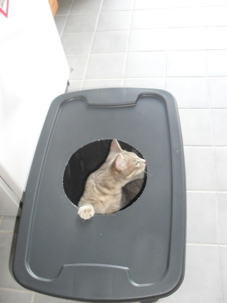 this is one of the best pinterest I have ever used... not only does it eliminate the litter falling everywhere out of the box... but it keeps nosy little dogs from looking for treats...TMI ... I know... but if you have both you know it is the truth...