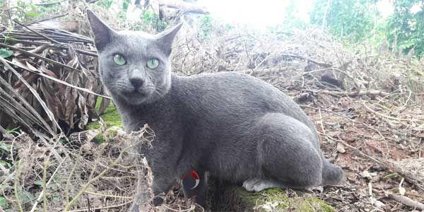 Hukum Jual Beli Kucing Menurut Islam - http://kucingraas.co.id/hukum-jual-beli-kucing-menurut-islam/