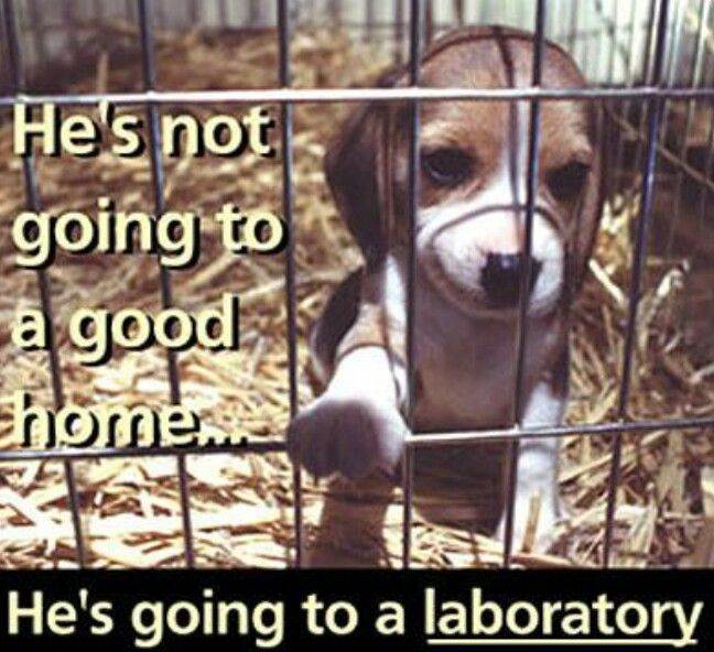 This innocent dog is being experimented on.