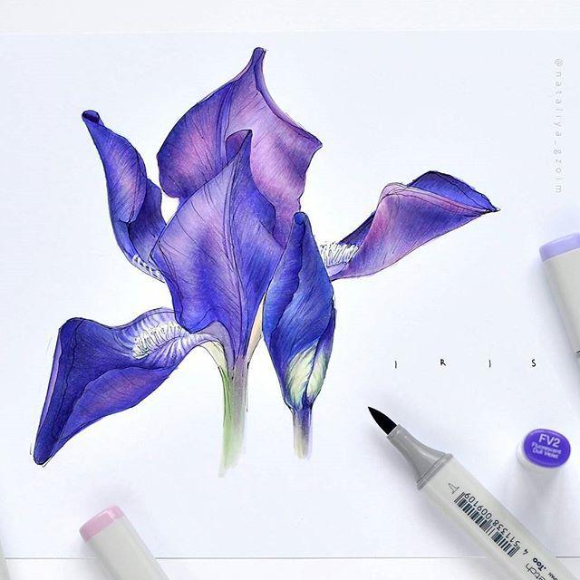 Продолжение фиолетового . #sketch #sketchbook #sketchaday #illustration #sketchmarker #copic #copicsketch #copicart #liner #colorpallet #colorpencils #prismacolor #art #drawing #copicmarker #sketcher #botanical #forest #colors #markers #spring #ботаника#рисунок#ботанический_баттл#ботанический_баттл_бой_без_правил #рисуйкаждыйдень #prismacolor #colorpencils#topcreator #artists