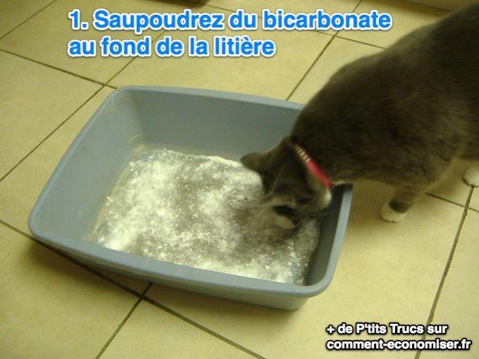 Saupoudrez du bicarbonate de soude au fond de la litière de votre chat, pour éliminer les mauvaises odeurs.