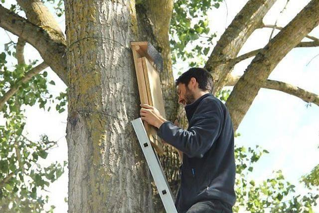 aidé de quatre bénévoles du groupe mammalogique breton (gmb), thomas campion a installé 50 nichoirs, suspendus à quatre mètres de haut dans les arbres, le long du canal ou de la Vilaine. Les nichoirs sont réservés à la pipistrelle de Nathusius, une espèce de chauve-souris.