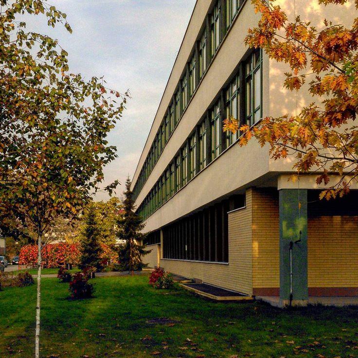 #budynek35 z innej perspektywy #jesień #brzoza #betula #dąb #quercus #żółtedrzewo #żółteliście #ogrodnictwo #WOBiAK #SGGW 🍂🌲🌳 another wiev of #building35 #autumn #fall #birch #birchtree #oak #oaktree #jellowtree #jellowleaves #horticulture #WULS