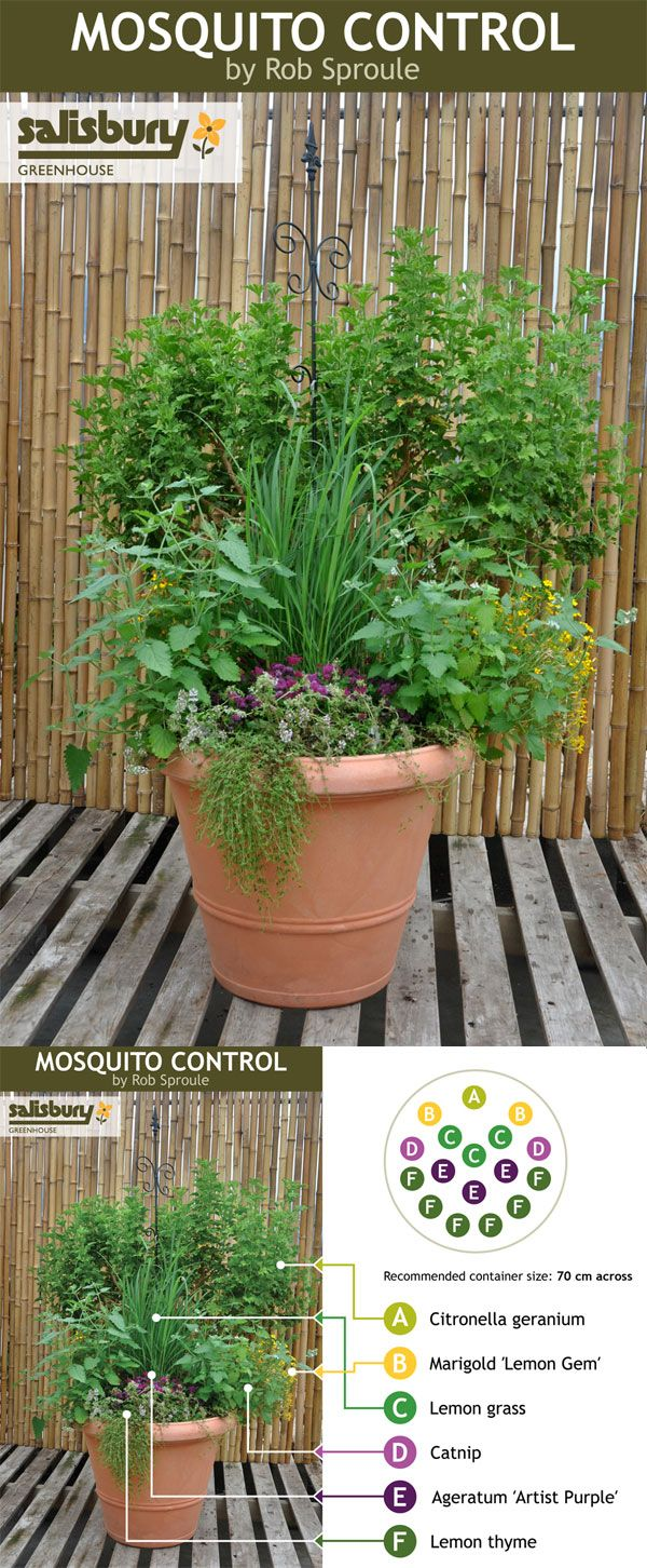 Plant a Mosquito Control container so you can sit and unwind in the evenings without dousing in DEET #mosquitos