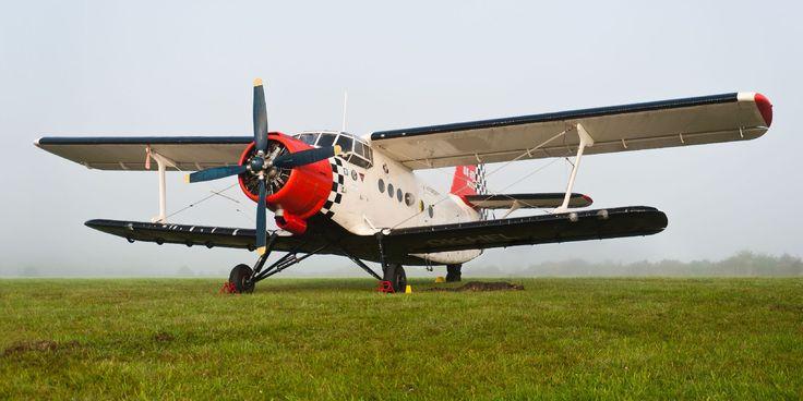 AN-2-Colourful