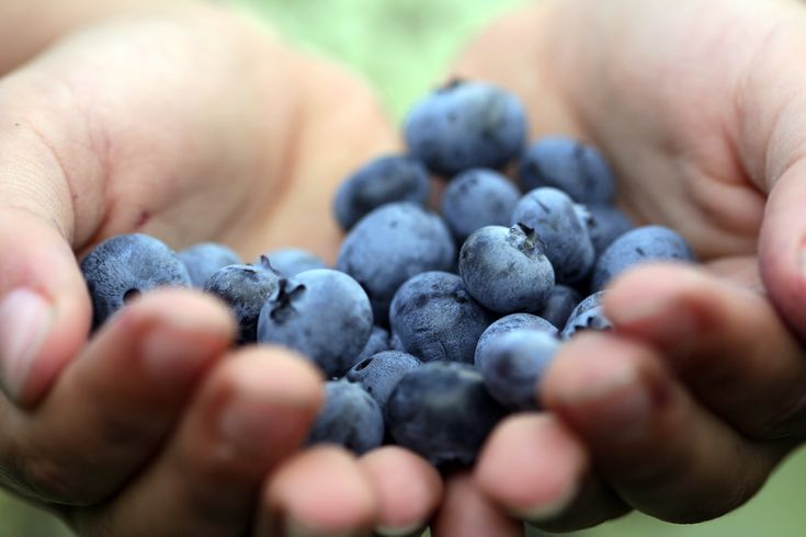 Blueberries:  Oh my! Blueberries are a a little blue ball of heaven, so of course they're a superfood. Vitamin C, fiber, and cancer fighting anti-oxidants make these the ideal addition to yogurt or, better yet, our next superfood…