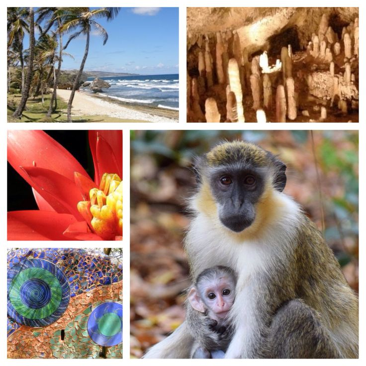 Best Our Barbados Tours And Excursions Images On Pinterest - Barbados tours