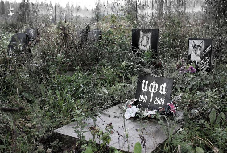 Гатчина. кладбище домашних животных