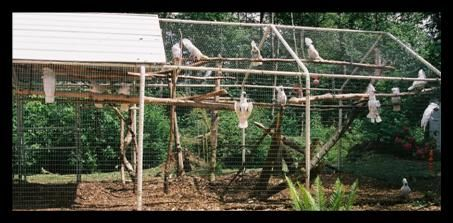 Costco carport aviary