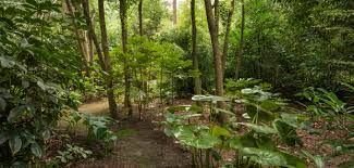 Image result for christchurch new zealand garden