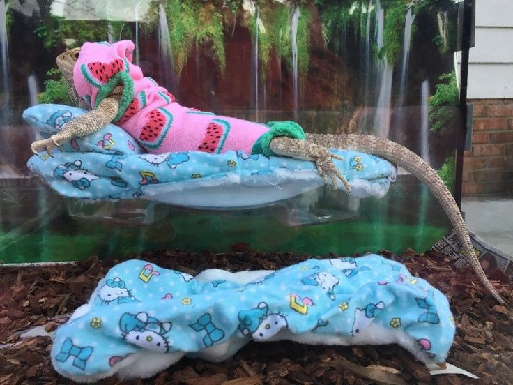 HELLO KITTY PRINT DESIGN LRG ATTACHABLE RESTING BED BLUE COVERS 4 BEARDED DRAGON  | eBay