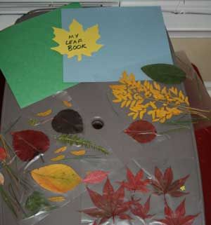 Pressed leaves and flowers in a nature journal.  Make sure to label them.