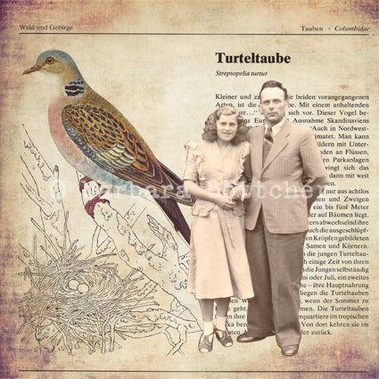 """Collage-print  """"Turteltaube"""" von busy bee auf DaWanda.com"""