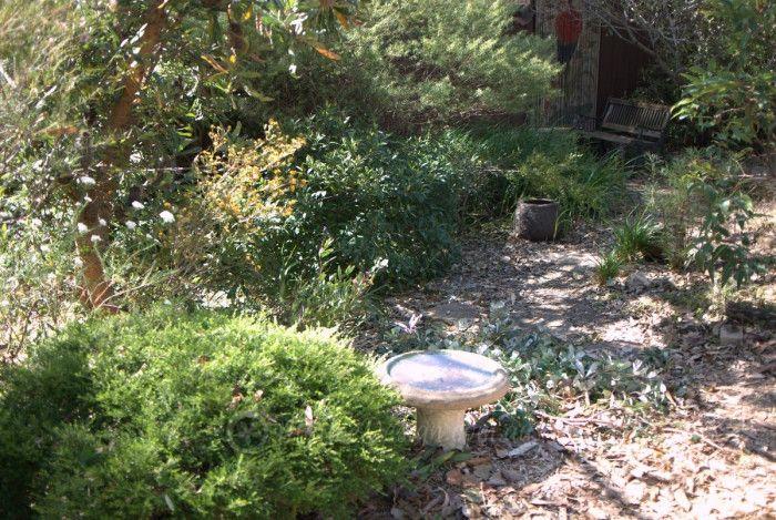 Australian Plants Society Open Gardens: Hogue Garden Jannali