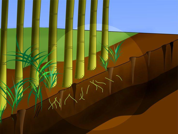 Bien que le bambou constitue un parfait élément de décoration, il peut aussi devenir une plante particulièrement envahissante. Il est difficile de s'en débarrasser, quelle que soit la méthode que vous choisissez. Heureusement, il n'est pas ...