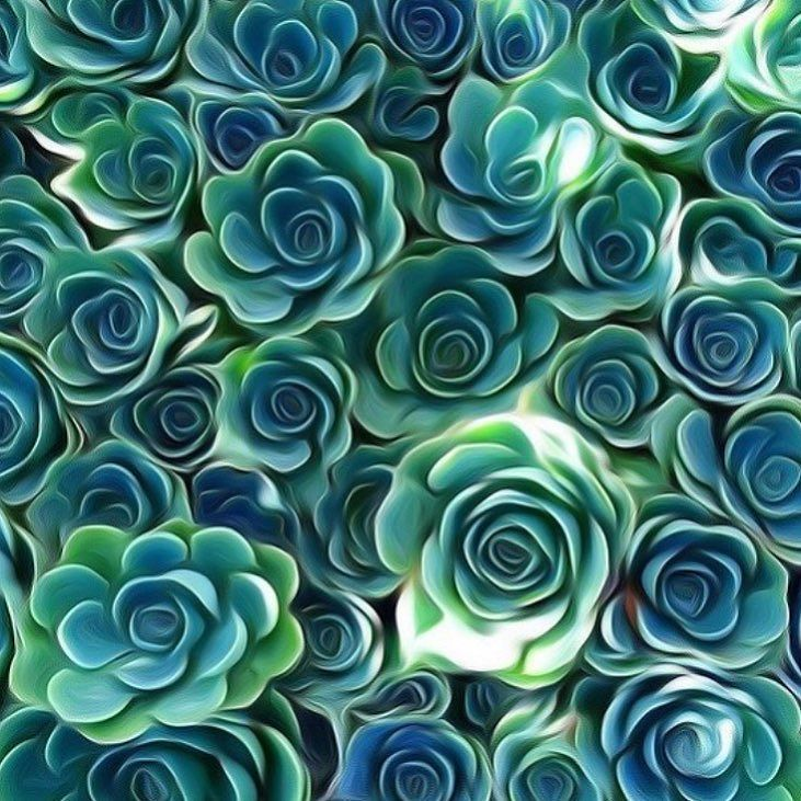 Swirly goodness  #thesucculentsource #succulents #succulent