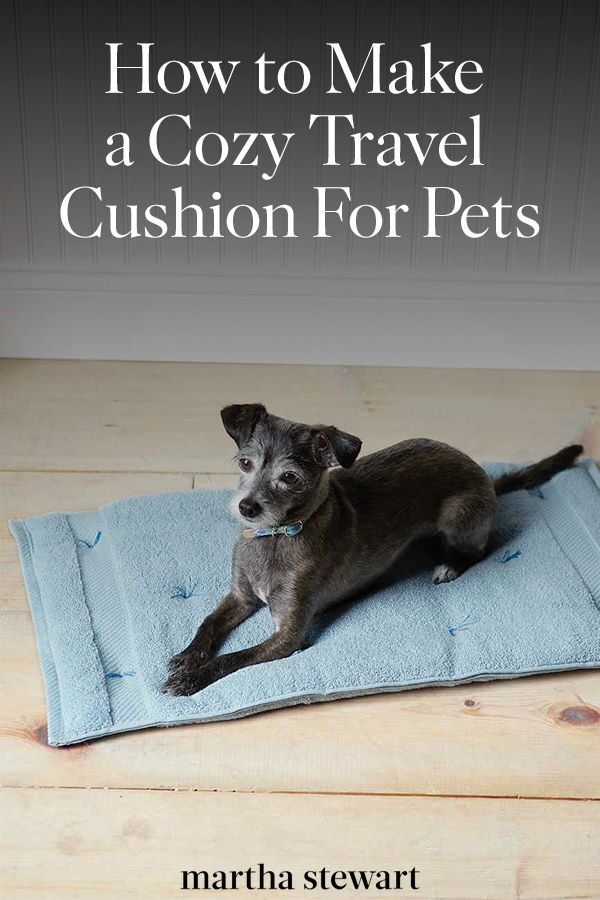 Cozy Travel Cushion For Pets Pets Pet Accessories Dog Friends