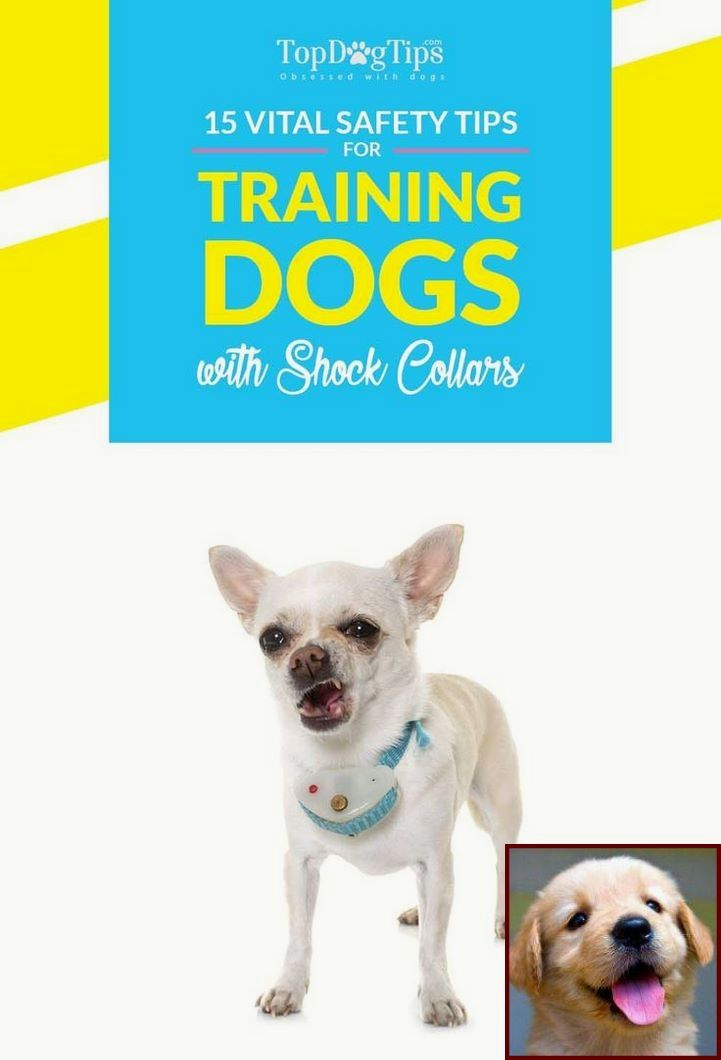 Potty Training A Puppy On Pee Pads And Clicker Training Dog
