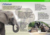 Website met 38 prachtige taakkaarten voor de vakken natuur, geschiedenis, aardrijkskunde en techniek