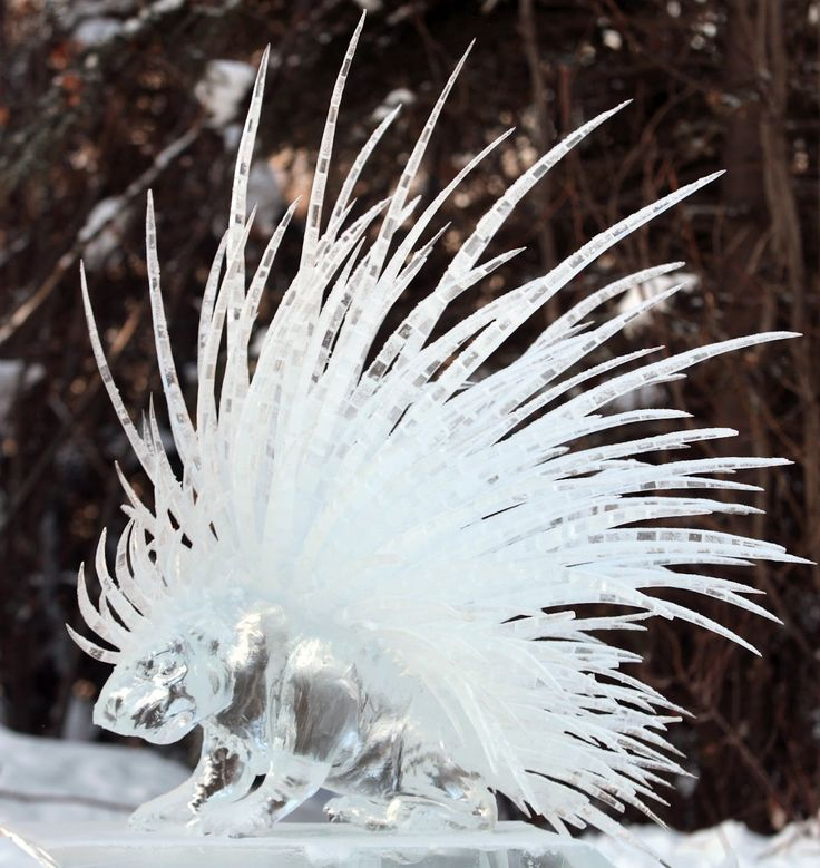 (Porcupine Ice Art.)  * * SUPER AWESOME CREATIVITY! THING IS, IT'S ICE AND ALL THAT HARD WORK WILL EVENTUALLY MELT. UNLESS THEY HAVE SPECIAL 'ICE SCULPTURE' FREEZERS.