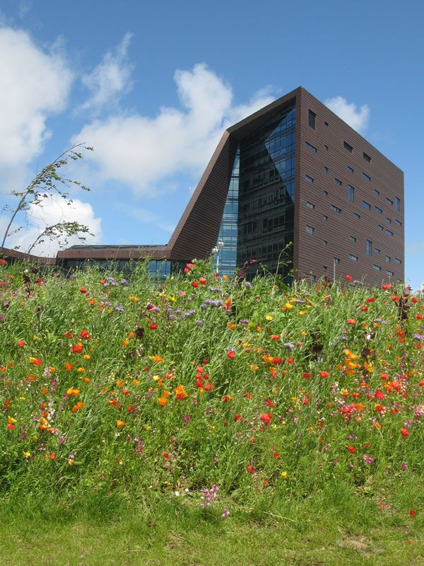 Twitter / BexleeCoUk: A meadow seems to have grown around the Roland Levinsky Building - Plymouth University