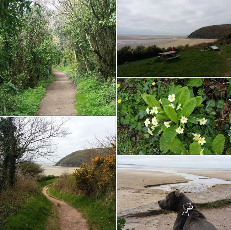 Coastal Walk from Llansteffan Beach to Scott's Bay x