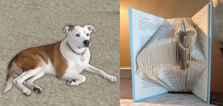 Custom Dog or cat, etc. Folded book art