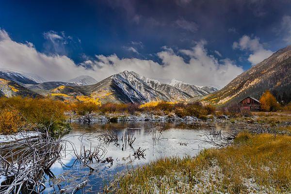 11 best landscape photographs images on pinterest art for Pond reeds for sale