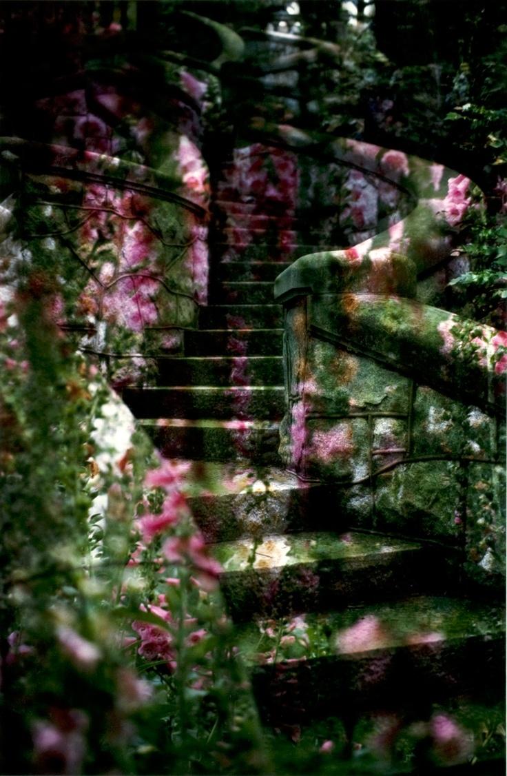 Secret Garden: 832 Best Moss Gardens Images On Pinterest
