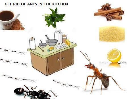 Парно инсецт