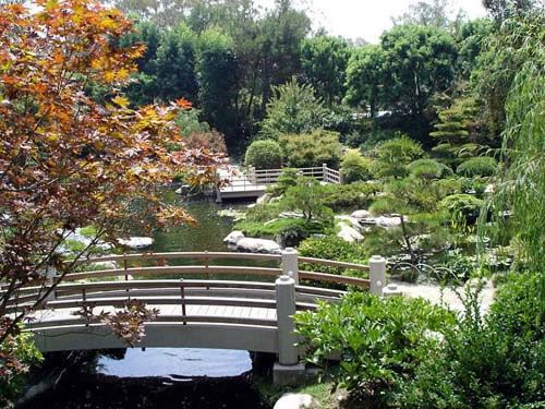 Csulb japanese garden local things to do pinterest for Koi fish pond csulb