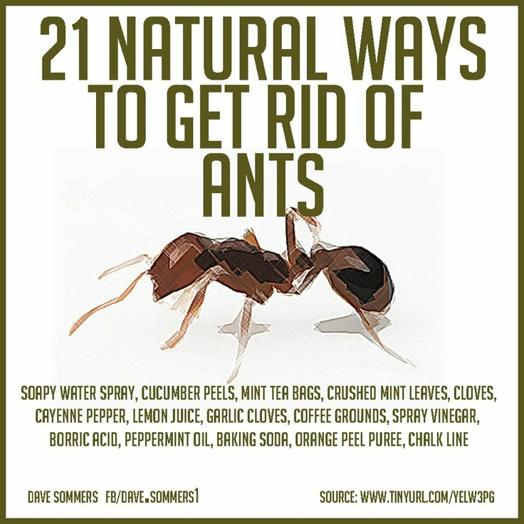 86 Best Images About Pests And Insects On Pinterest