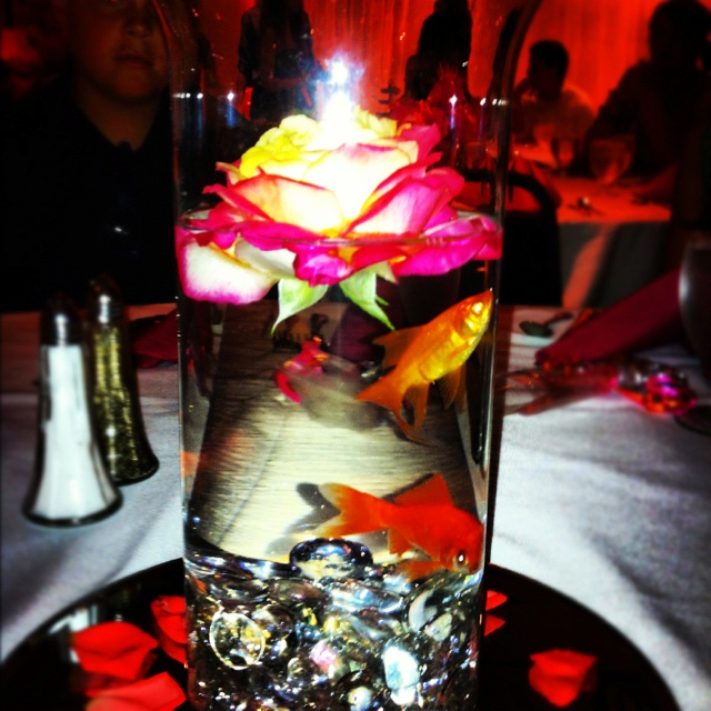 Best 25 Inexpensive Wedding Centerpieces Ideas On: Best 25+ Goldfish Centerpiece Ideas On Pinterest