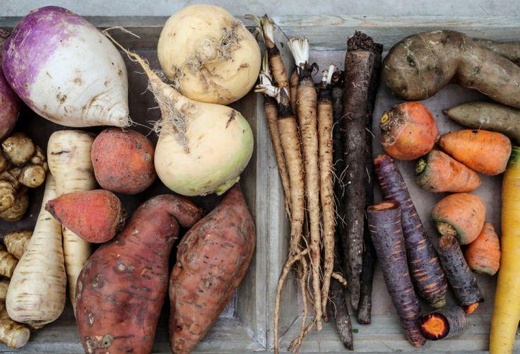 G'riß ums G'mias: Gabriele Wild-Obermayr ist mit Licht-Wurzel, Vogelmiere, Yacon, Winterrauke und Ochsenherz-Karotte auf Du. Die Gemüse-Pionierin zieht längst vergessene Gemüsearten auf ihrem Hof in Niederneukirchen. Mehr dazu hier: http://www.nachrichten.at/oberoesterreich/hoamatland/G-riss-ums-G-mias;art160787,1697898 (Bild: Weihbold)