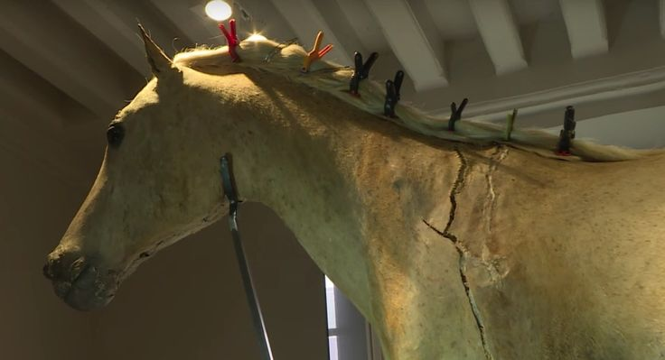 Taxidermists Are Restoring Napoleon's Famous Arabian Stallion, Le Vizir