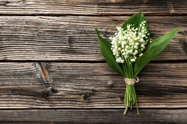 17 fakta alla som älskar liljekonvaljer borde känna till - Sköna hem