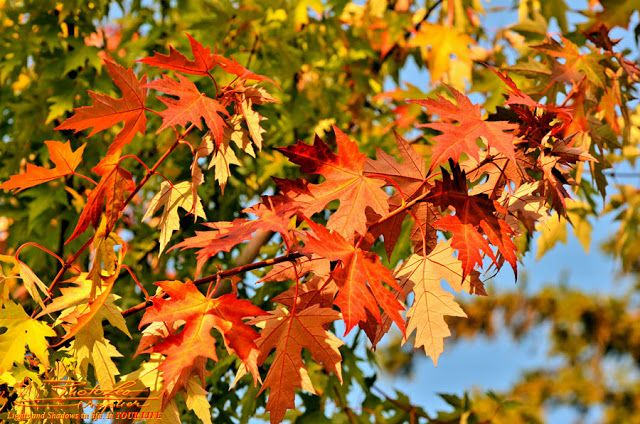 The Fall's Parade... by http://PhotoLeoGrapher.blogspot.com
