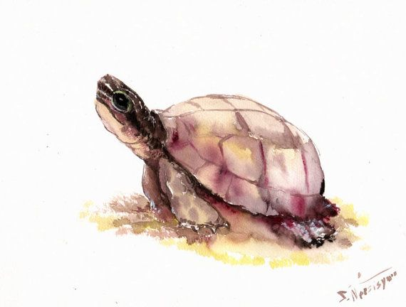 Turtle Original watercolor painting 9 X 12 in by ORIGINALONLY, $28.00